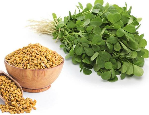 Review About Fenugreek