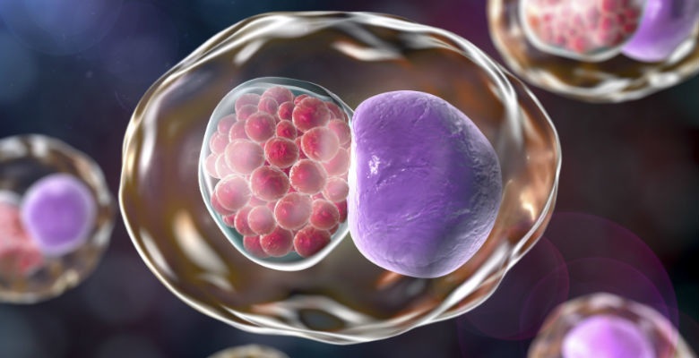 New treatment for Chlamydia discovered