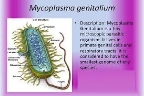 mycoplasma genitalium symptoms male