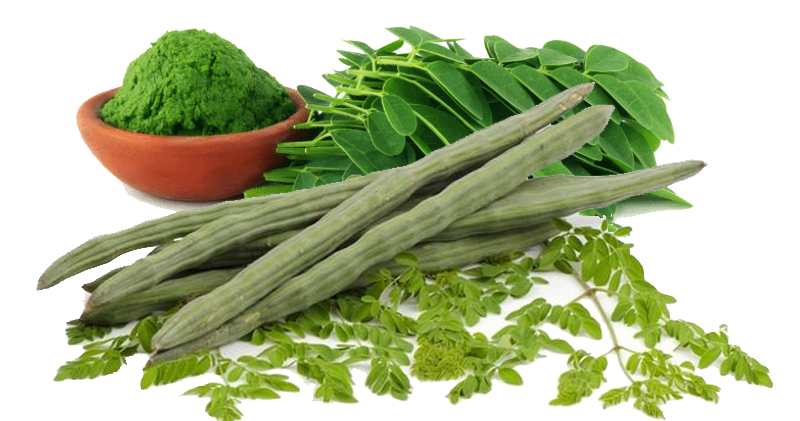 Ten Health Benefits Of The Moringa Leaf (Thai: Marum, Moringa) - Thailand Medical News